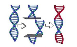 The practice of Gene Splicing